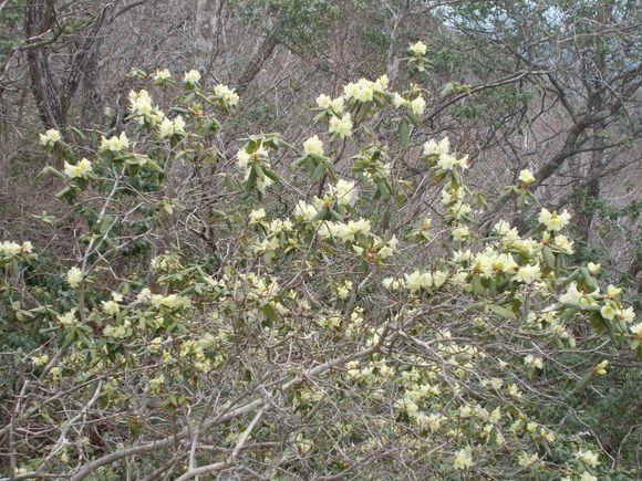 定点1—一番開花が早い株