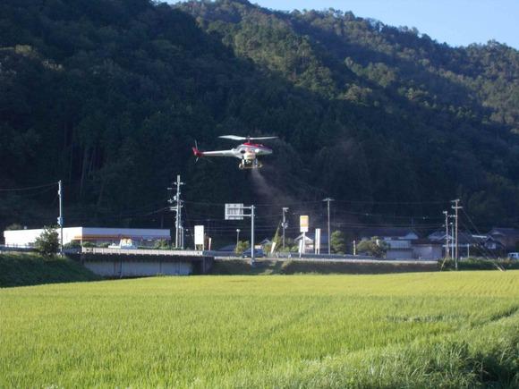 福井集落の水田で飛ぶ