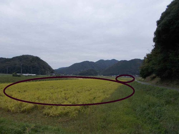 稲刈りが済んだ集の田の中で、だ円で囲った二枚の田