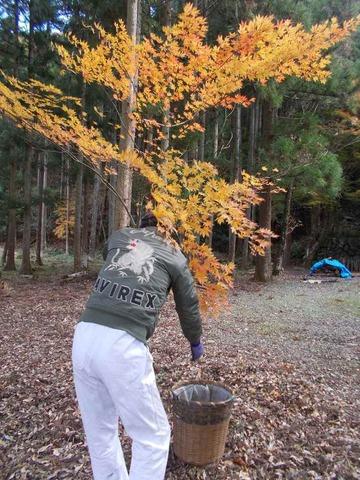 低い木は、手でつまみ採ります