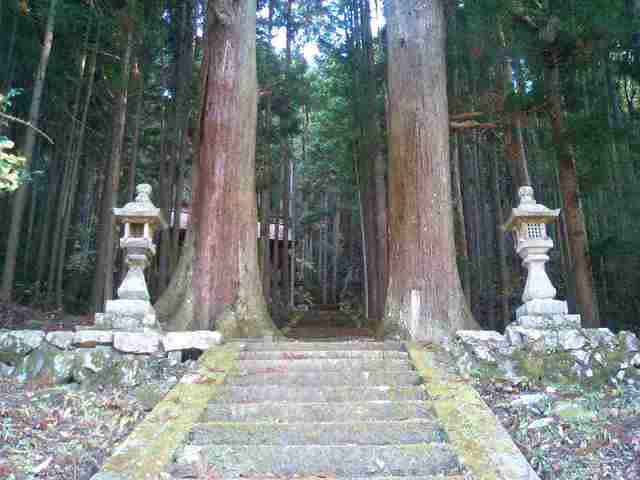 樹齢200年の大杉