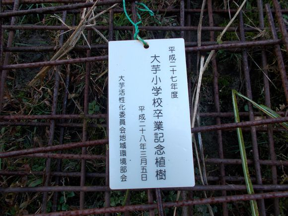サクラの木に付けられていた標識