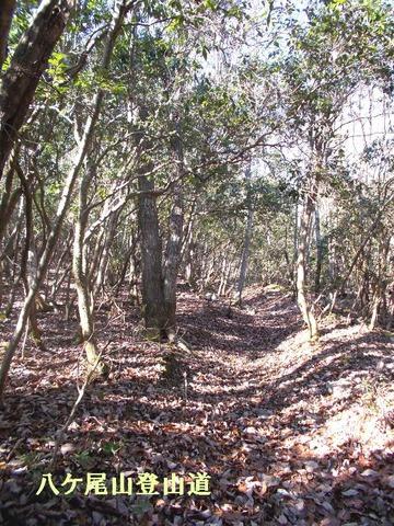 八ケ尾山の登山道