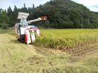 秋雨後、稲刈り始まる