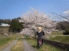 水車とかかしの里 桜満開