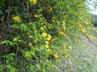 大芋の野の花々