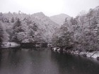 大芋・雪の水面(みずも)三景