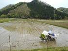大芋地区で最初の田植え