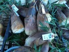 大芋の朝市は野の味いっぱい!