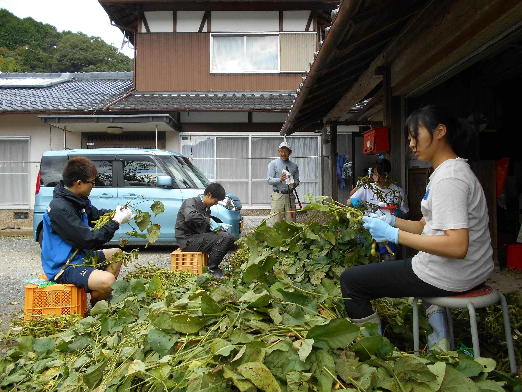 納屋の前で、家の人に教わりながら葉取りです