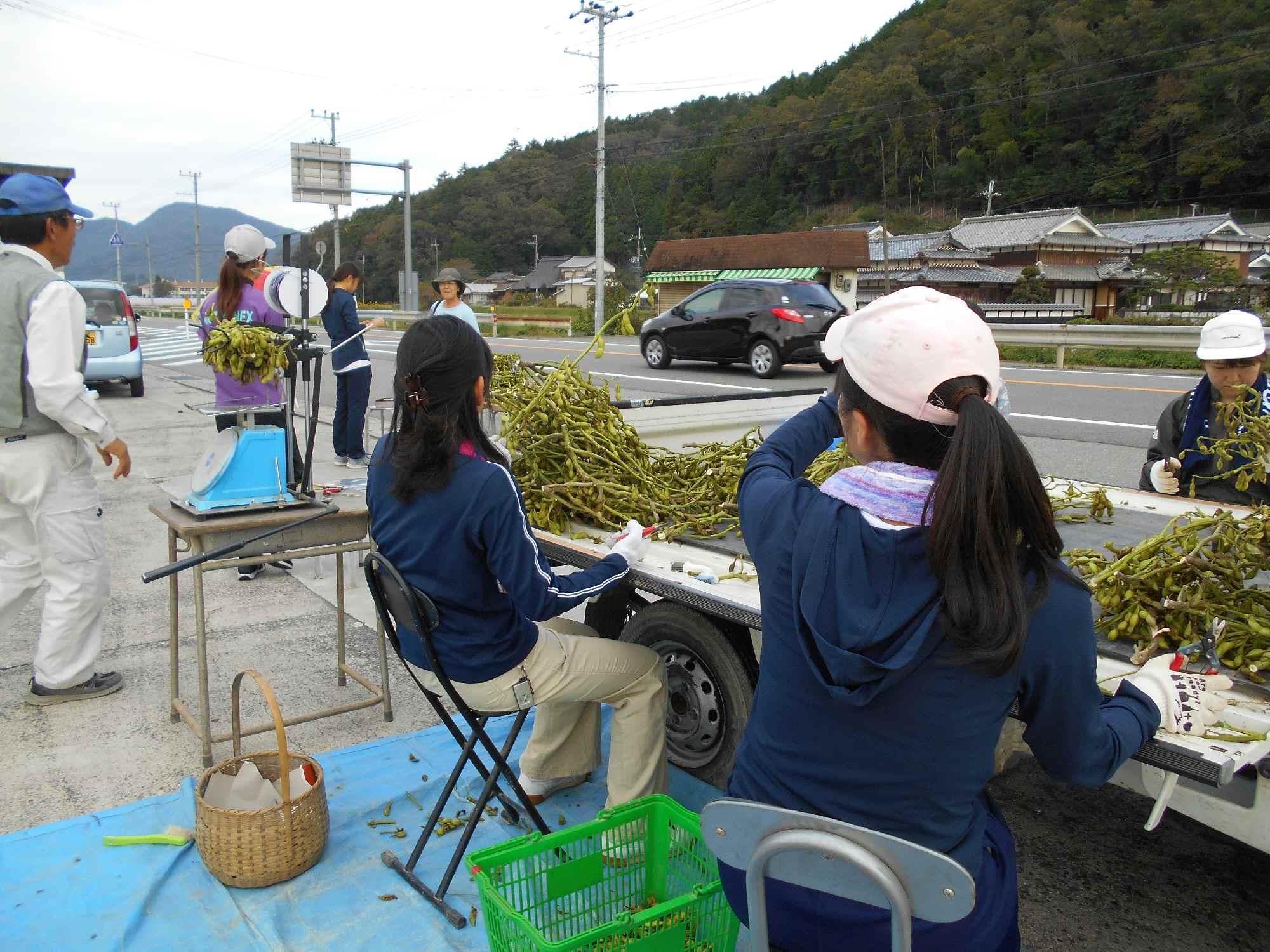 軽トラの上で、枝豆を整理し、束ねて売りました