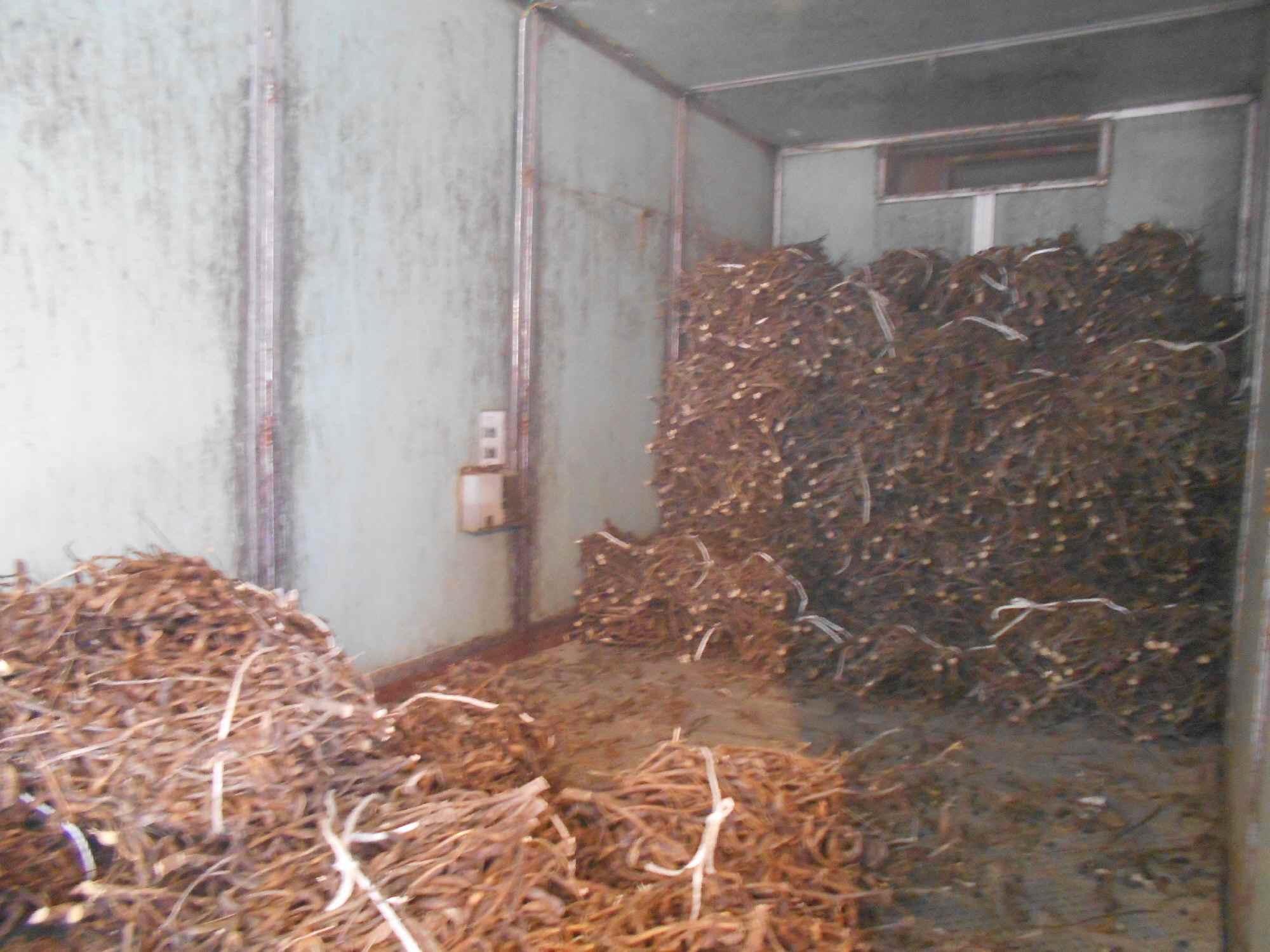 乾燥機の内部。黒大豆は束ねて入れられています。