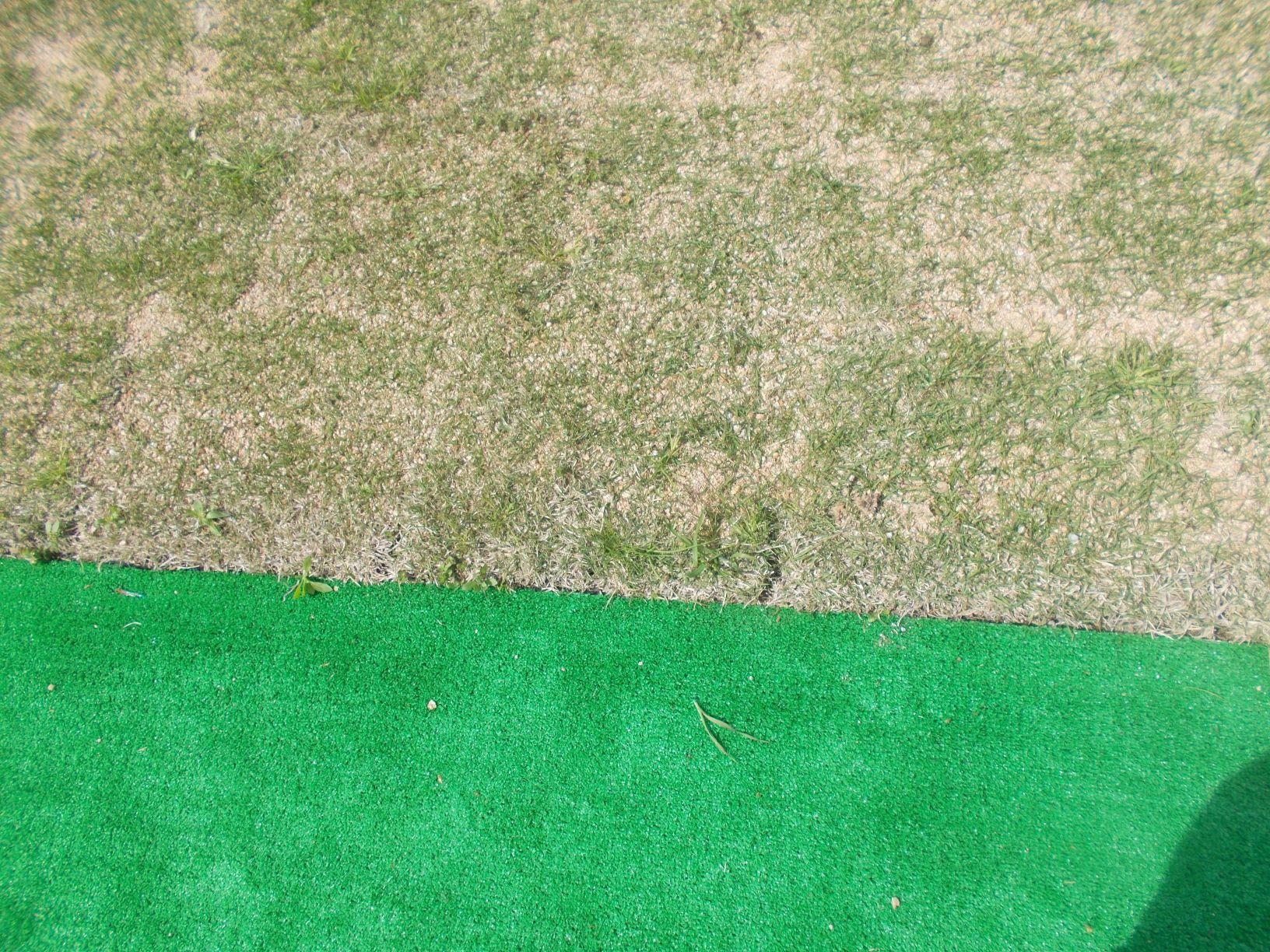 手前が人工芝、おくが天然芝