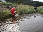 大芋の川で生き物調査
