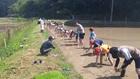 大芋小学校の田植え