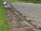 黒豆の植え付け準備その1